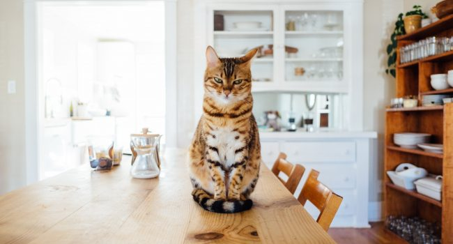 Consumers prioritize pet-friendly homes